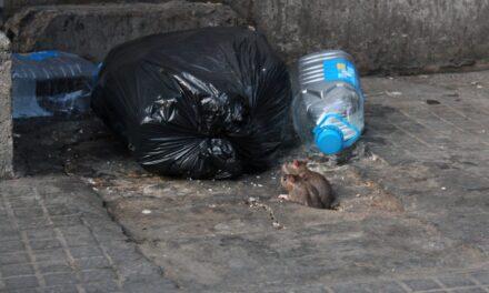 Pass på matrestene: Ikke la rottene rydde etter grillfesten